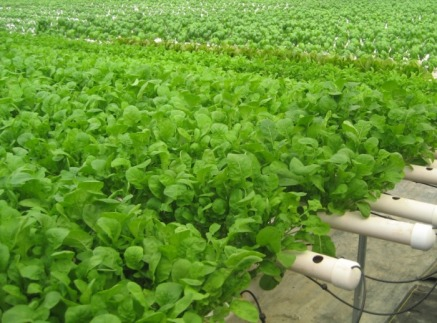 Post image for 005 Hydro Greens: Micro Greens Fresh From The Field